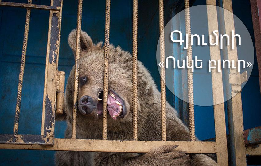 Մի՛ բանտարկեք վայրի կենդանիներին
